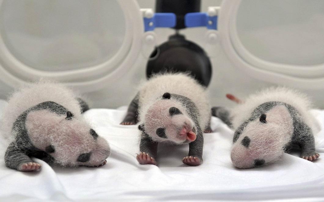 luchshie foto zhivotnyx v avguste 3 Лучшие фотографии животных со всего мира за неделю