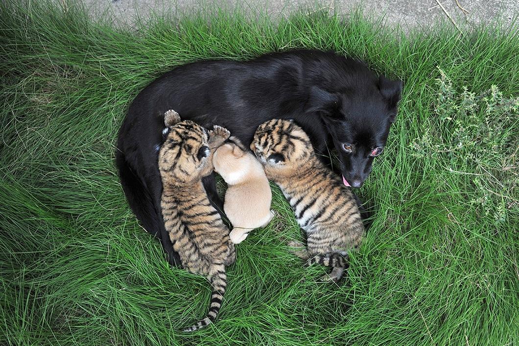 luchshie foto zhivotnyx v avguste 6 Лучшие фотографии животных со всего мира за неделю