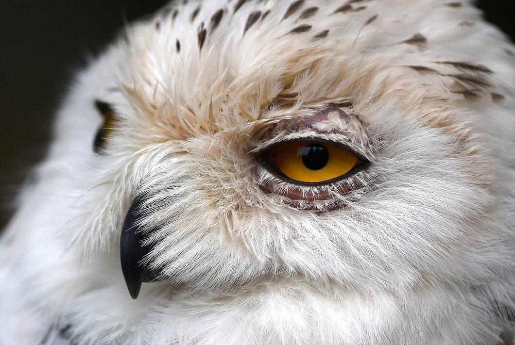 luchshie fotografii zhivotnyx 10 Лучшие фотографии животных со всего мира за неделю