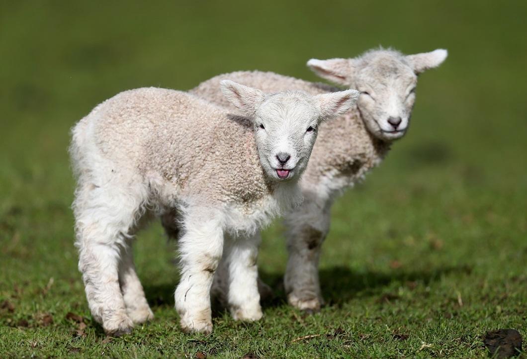 luchshie fotografii zhivotnyx 11 Лучшие фотографии животных со всего мира за неделю