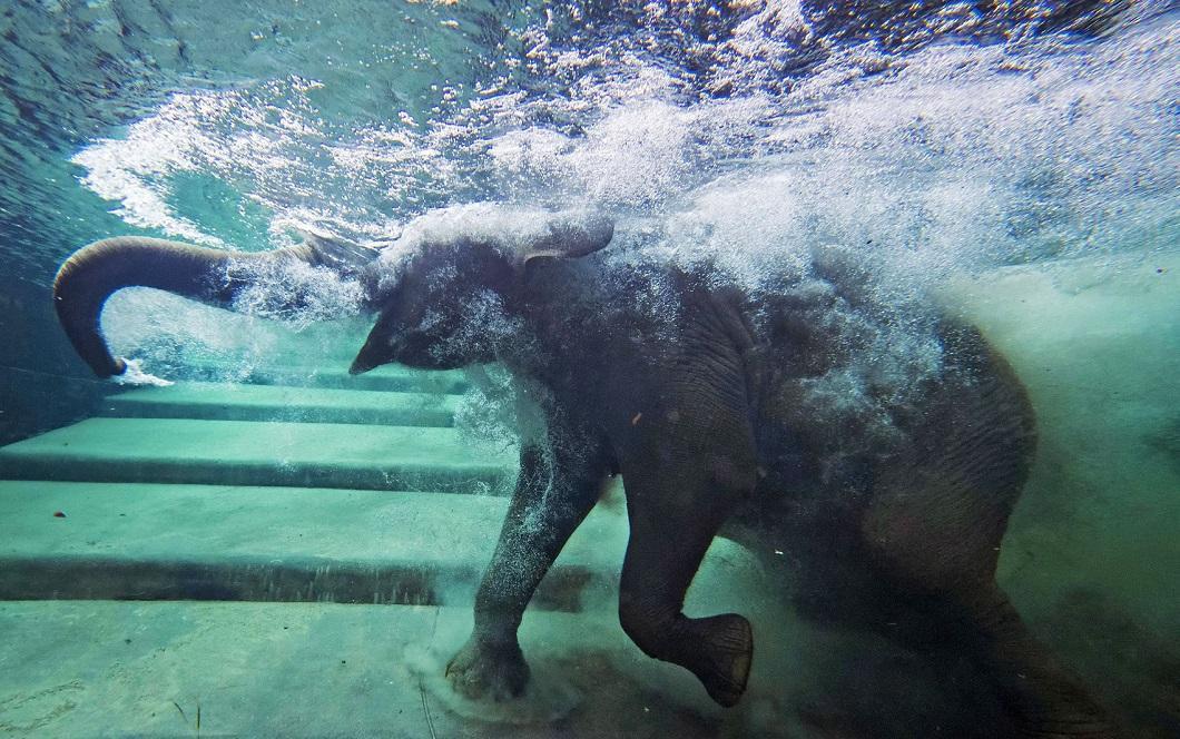 luchshie fotografii zhivotnyx 2 Лучшие фотографии животных со всего мира за неделю