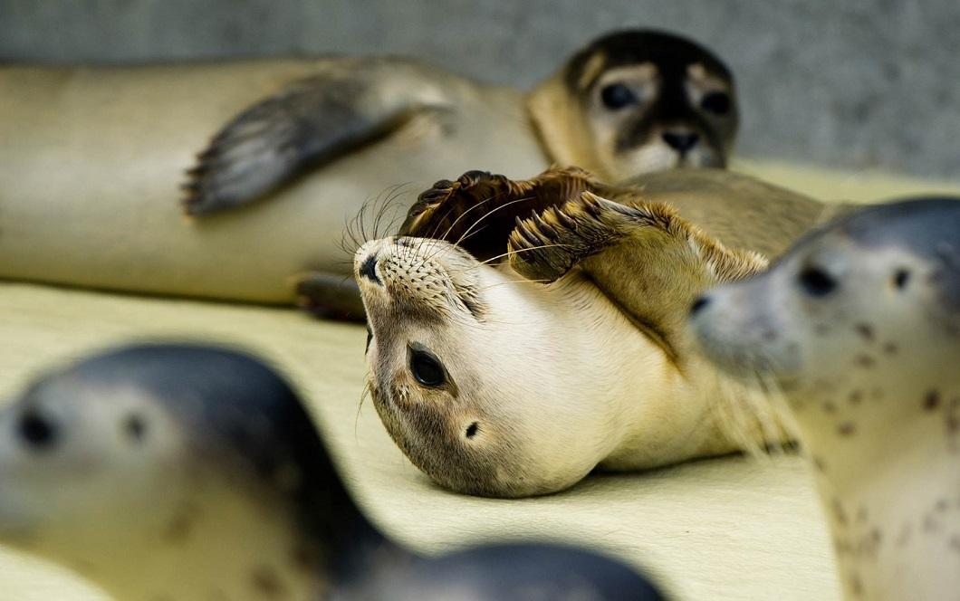 luchshie fotografii zhivotnyx 4 Лучшие фотографии животных со всего мира за неделю
