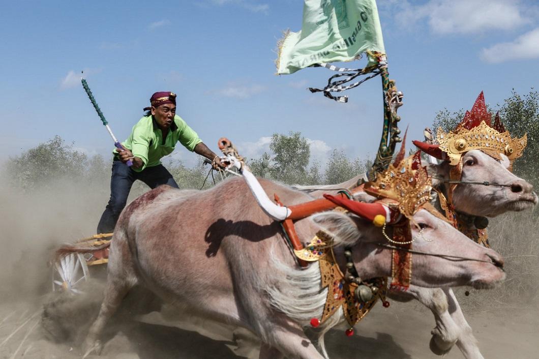 luchshie fotografii zhivotnyx 5 Лучшие фотографии животных со всего мира за неделю