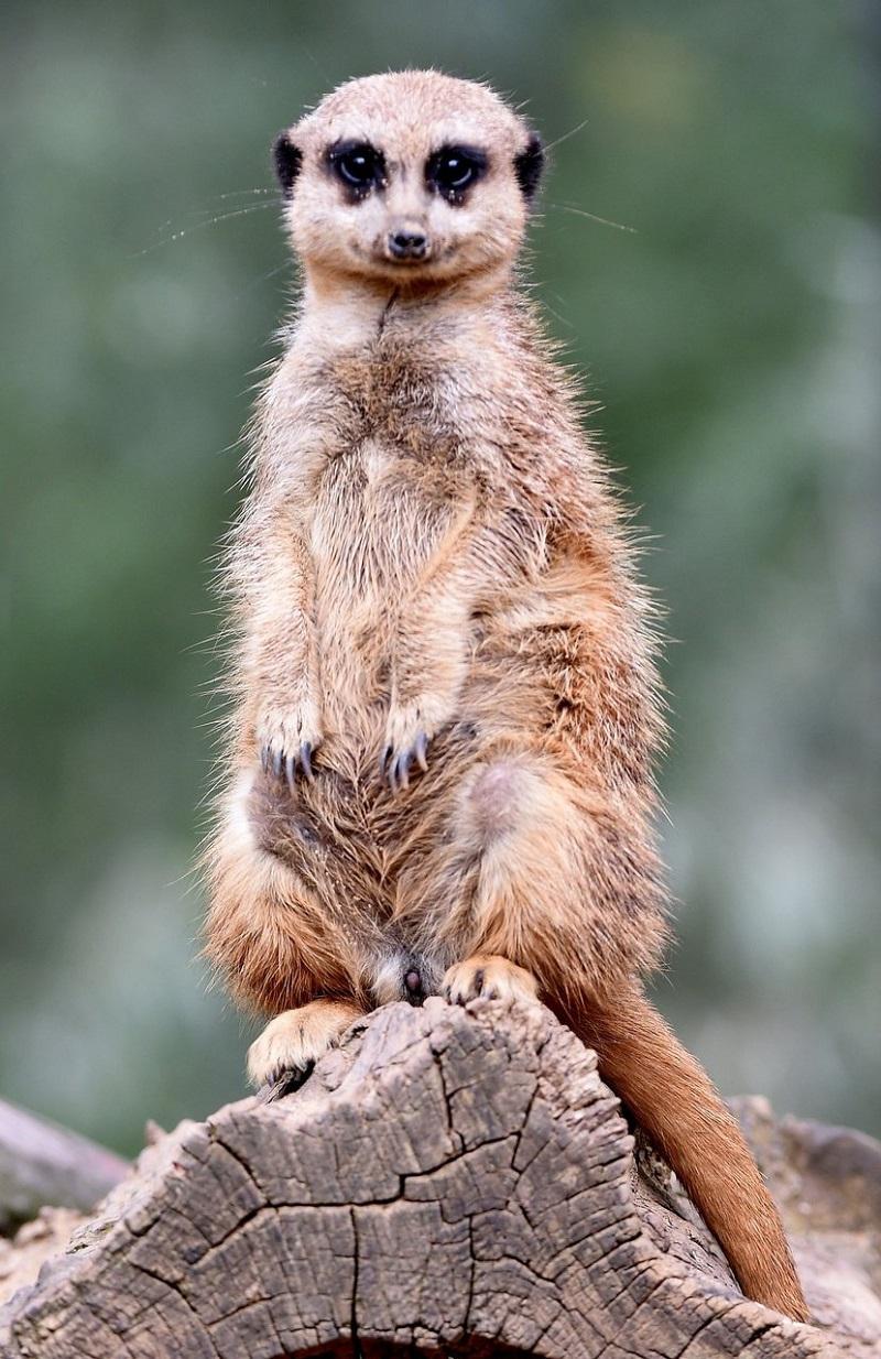 luchshie fotografii zhivotnyx 7 Лучшие фотографии животных со всего мира за неделю