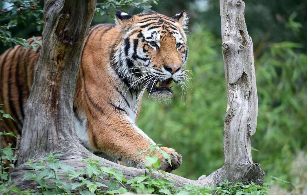 luchshie fotografii zhivotnyx 9 Лучшие фотографии животных со всего мира за неделю