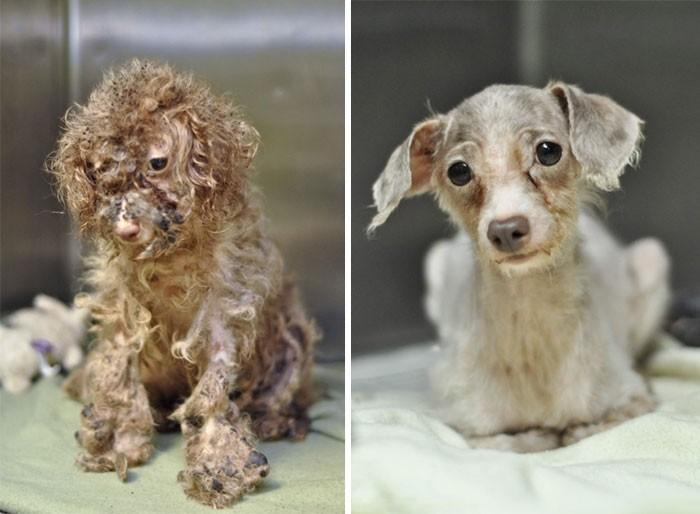 """16 stories of rescue dogs that are on the verge of death, in the style of """"before and after"""""""