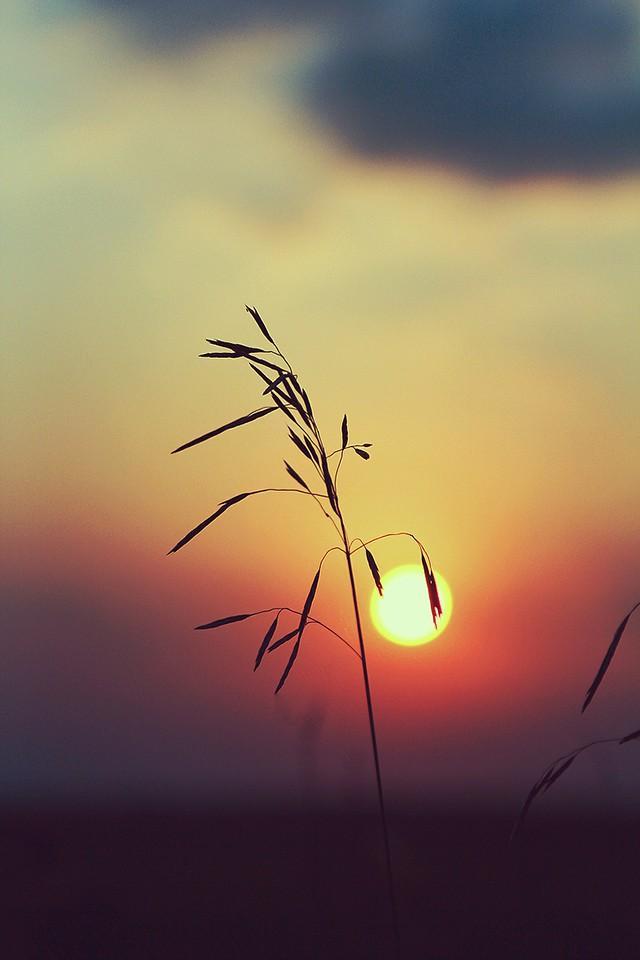 sunhunters10 Рассветы, закаты. Куда я, куда ты
