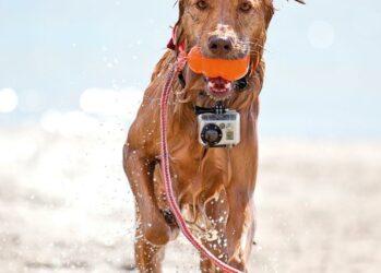 Удивительные фотографии сделанные животными