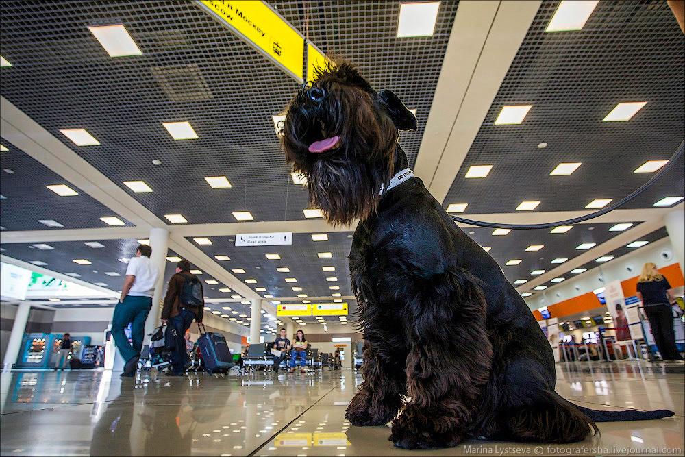 animaltrip01 Как перевозят животных самолетом