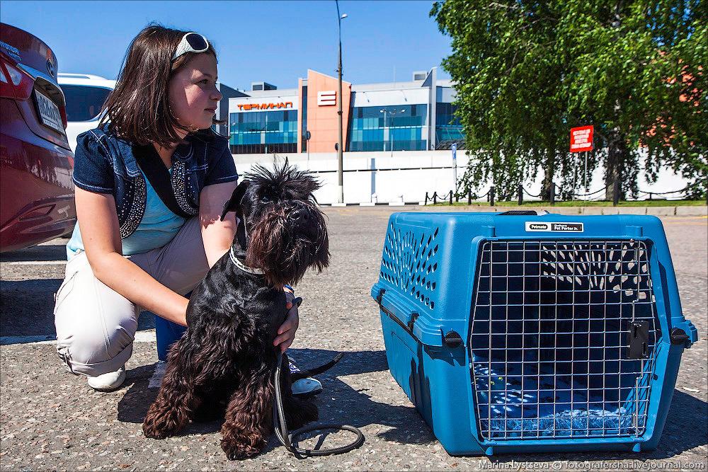 animaltrip02 Как перевозят животных самолетом
