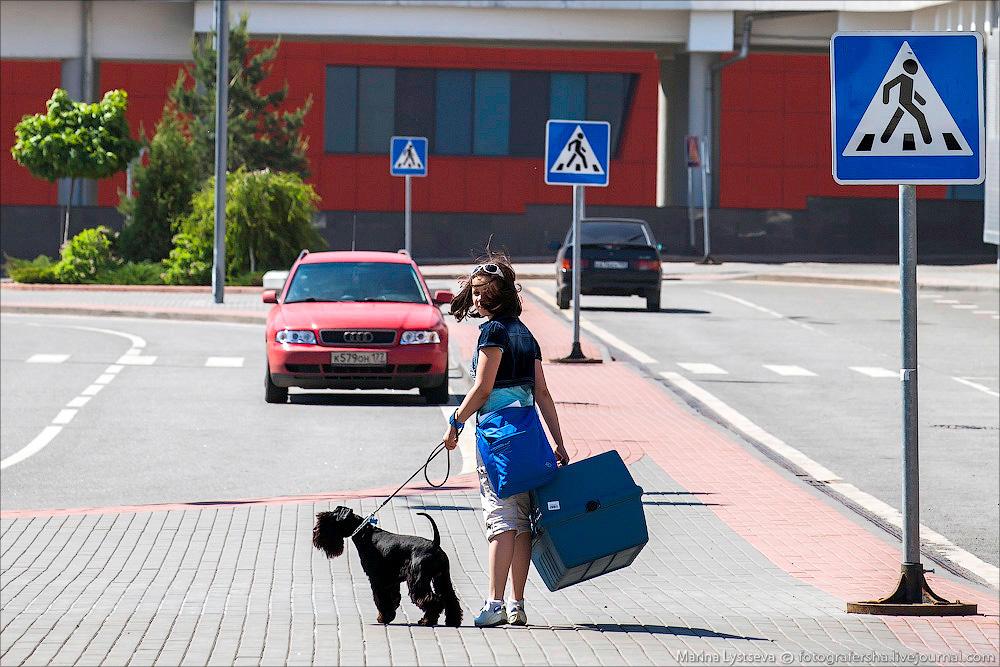animaltrip03 Как перевозят животных самолетом