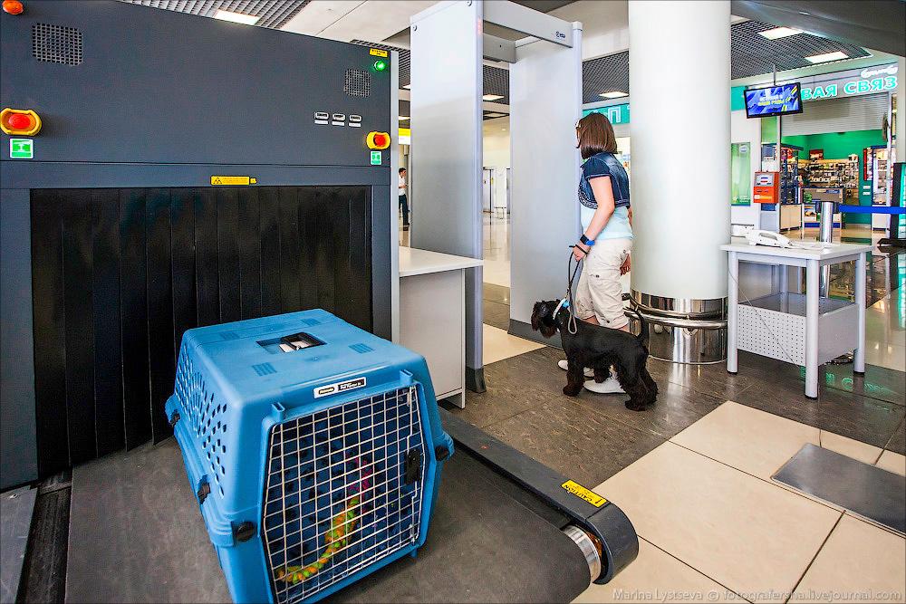 animaltrip05 Как перевозят животных самолетом