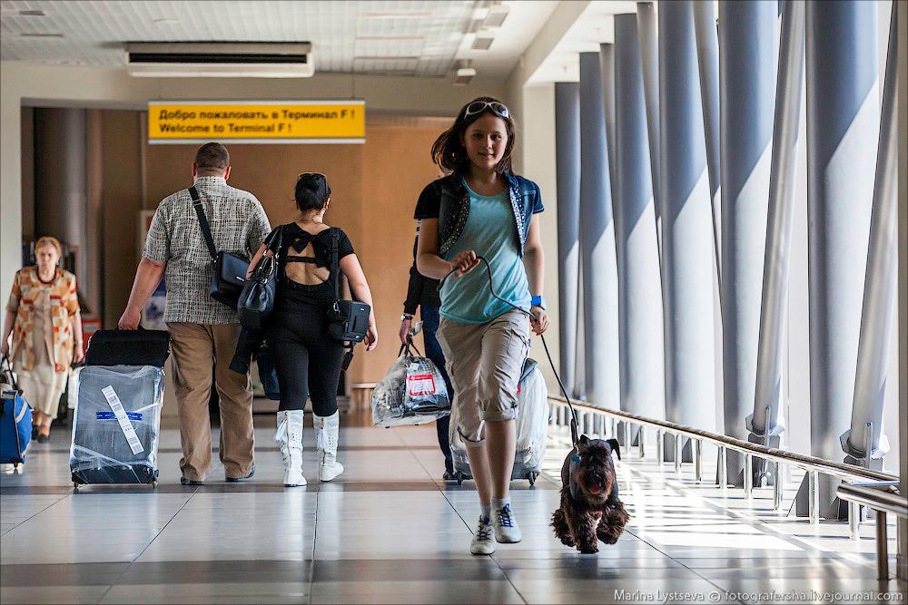 animaltrip14 Как перевозят животных самолетом
