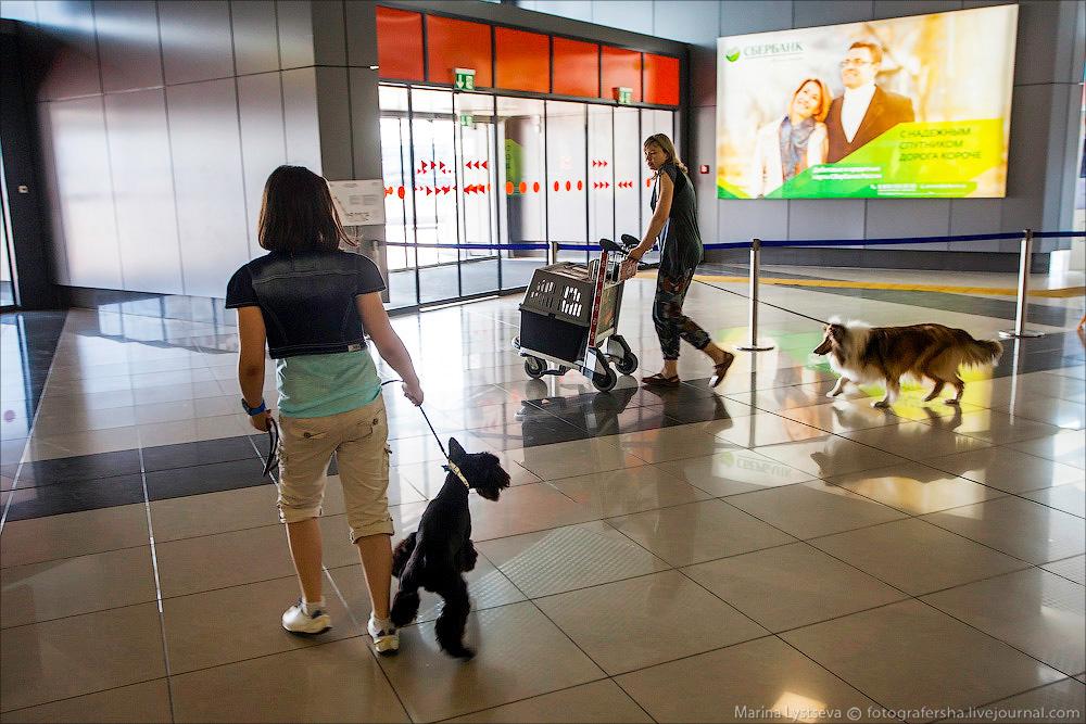 animaltrip17 Как перевозят животных самолетом