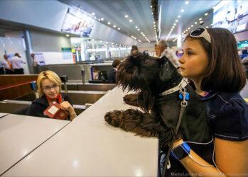Как перевозят животных самолетом