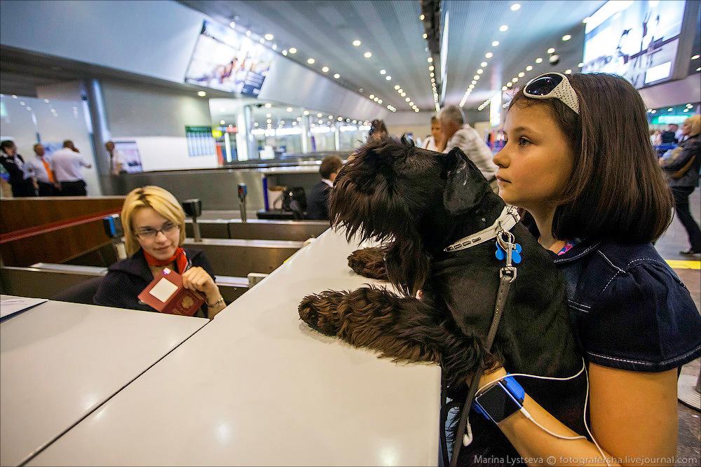 animaltrip18 Как перевозят животных самолетом