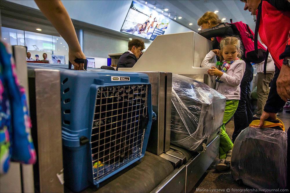 animaltrip19 Как перевозят животных самолетом