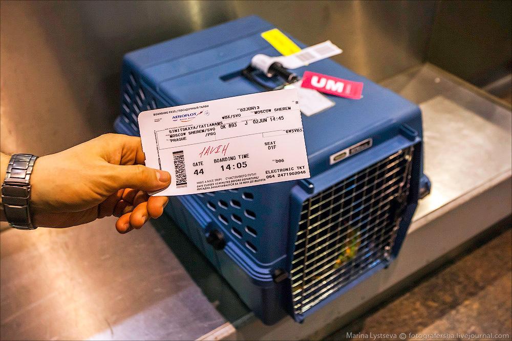 animaltrip21 Как перевозят животных самолетом
