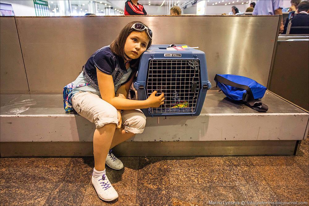 animaltrip23 Как перевозят животных самолетом