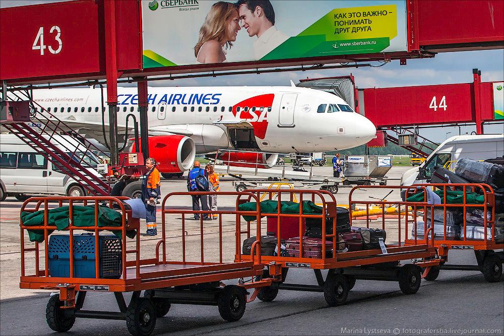 animaltrip27 Как перевозят животных самолетом