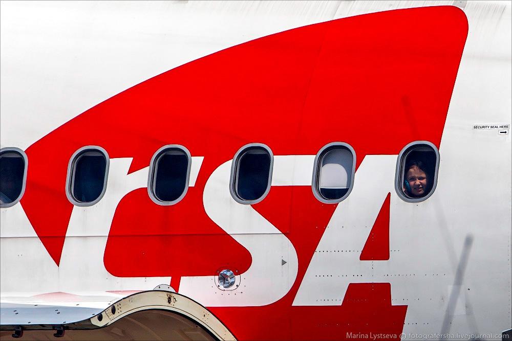 animaltrip28 Как перевозят животных самолетом