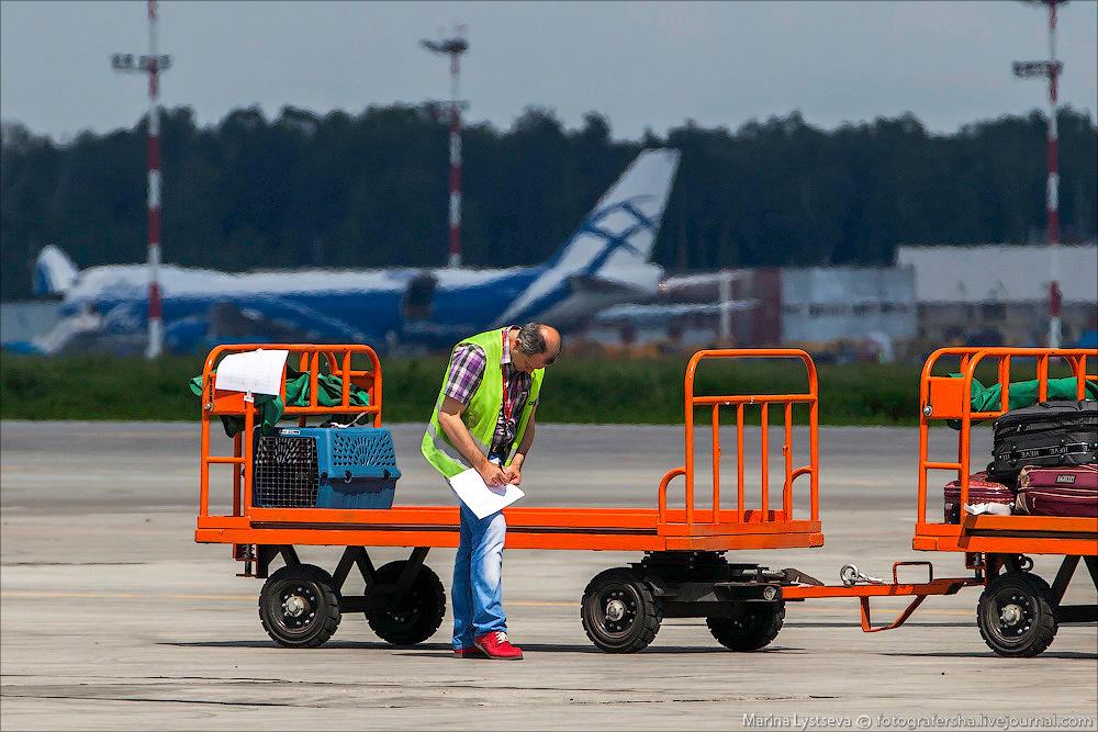 animaltrip29 Как перевозят животных самолетом
