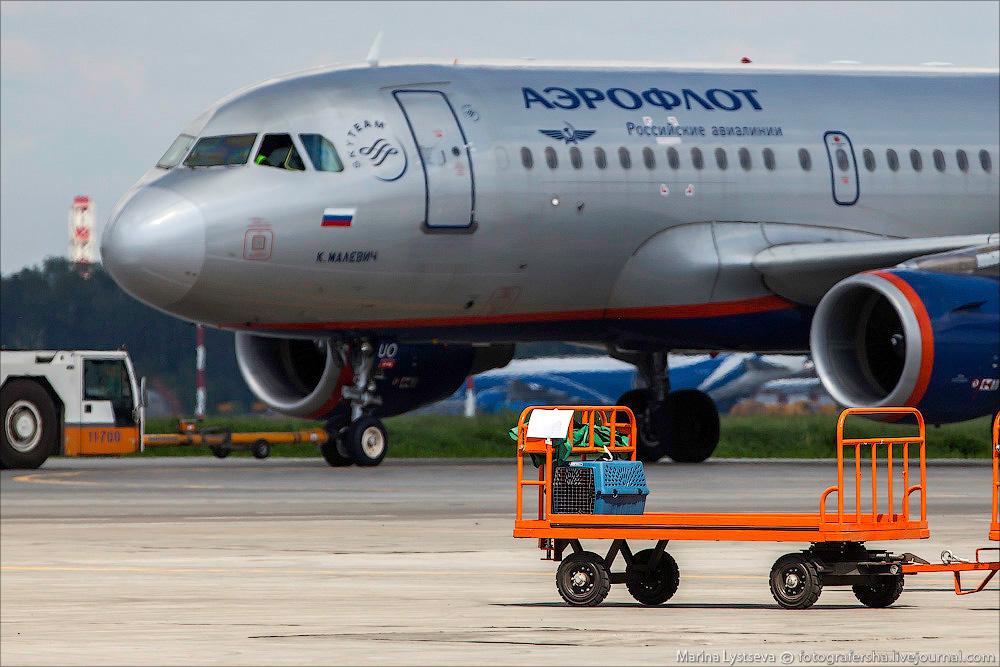 animaltrip30 Как перевозят животных самолетом