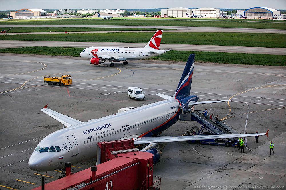animaltrip31 Как перевозят животных самолетом