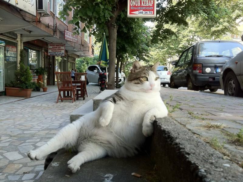catrules01 800x597 15 правил жизни настоящего кота