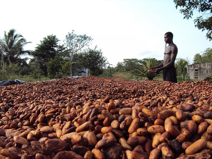 chocofacts17 25 «вкусных» фактов о шоколаде