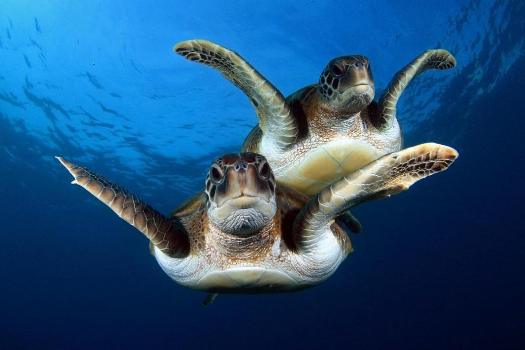 luchshie-foto-zhivotnyx-nedeli-v-sentyabre-13 Лучшие фотографии животных за неделю