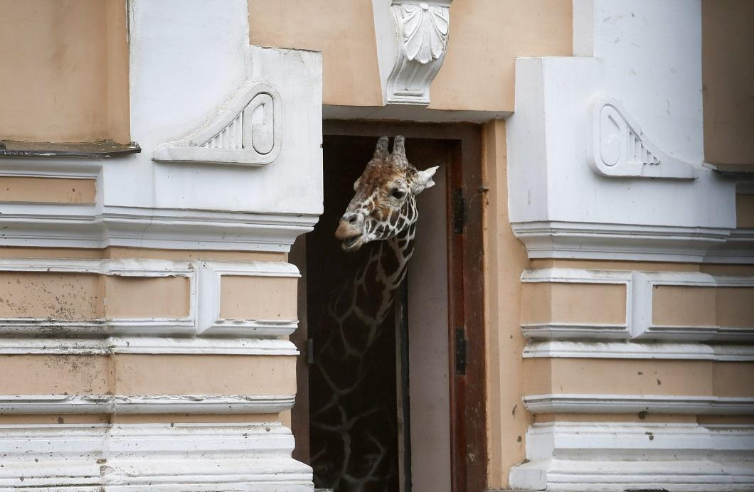 luchshie-foto-zhivotnyx-nedeli-v-sentyabre-14 Лучшие фотографии животных за неделю