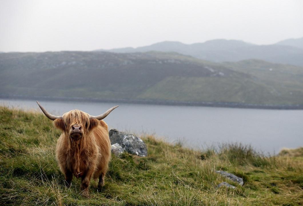 luchshie-foto-zhivotnyx-nedeli-v-sentyabre-7 Лучшие фотографии животных за неделю