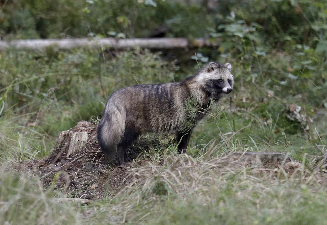 luchshie-foto-zhivotnyx-nedeli-v-sentyabre-8 Лучшие фотографии животных за неделю