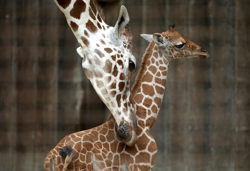 luchshie-fotografii-zhivotnyx-10 Лучшие фотографии животных со всего мира за неделю