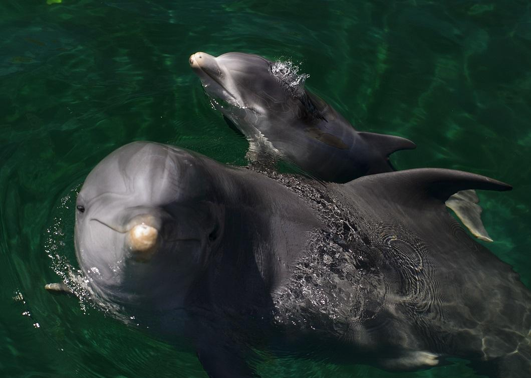 luchshie-fotografii-zhivotnyx-11 Лучшие фотографии животных со всего мира за неделю