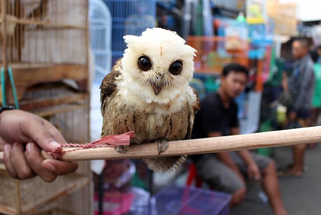 luchshie-fotografii-zhivotnyx-12 Лучшие фотографии животных со всего мира за неделю