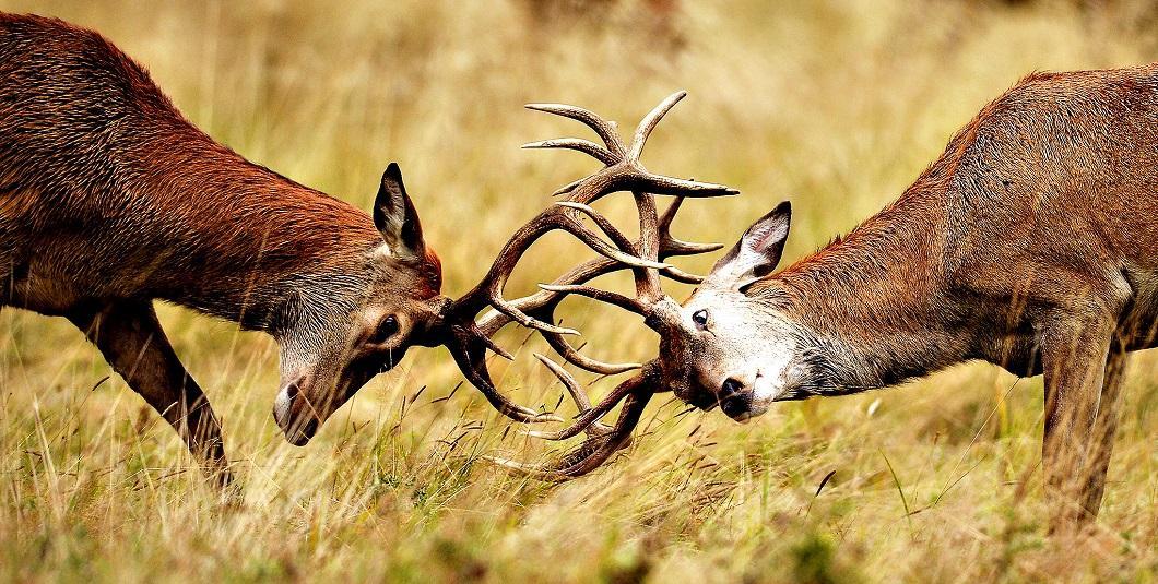 luchshie-fotografii-zhivotnyx-13 Лучшие фотографии животных со всего мира за неделю