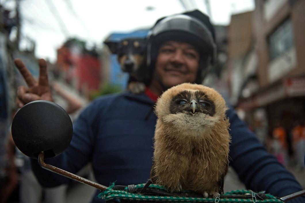 luchshie-fotografii-zhivotnyx-15 Лучшие фотографии животных со всего мира за неделю