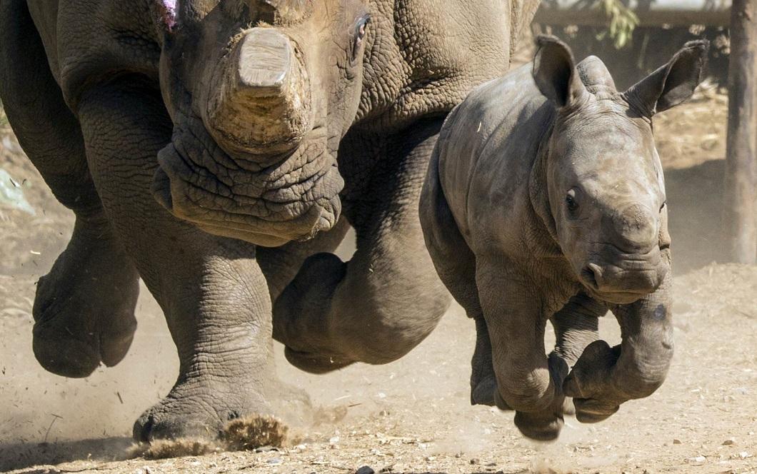 luchshie-fotografii-zhivotnyx-2 Лучшие фотографии животных со всего мира за неделю