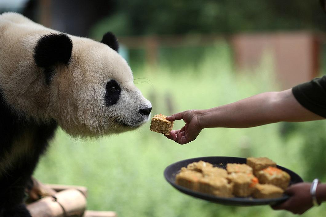 Картинки пища животных