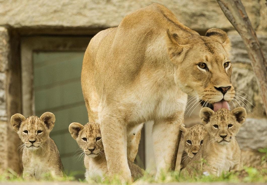 luchshie-fotografii-zhivotnyx-5 Лучшие фотографии животных со всего мира за неделю