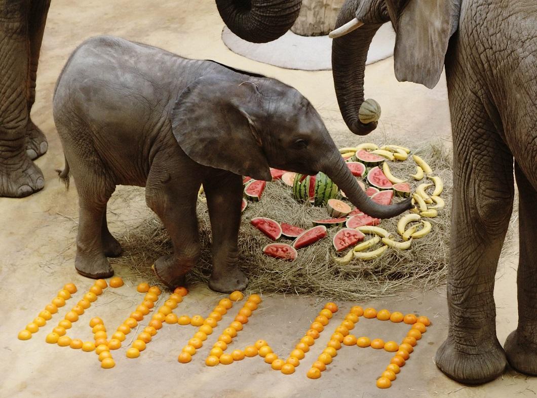 luchshie-fotografii-zhivotnyx-8 Лучшие фотографии животных со всего мира за неделю