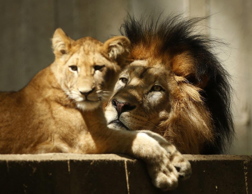 luchshie-fotografii-zhivotnyx-9 Лучшие фотографии животных со всего мира за неделю