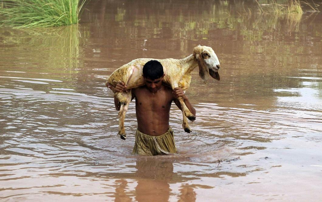 luchshie fotografii zhivotnyx nedeli v avguste 1 Лучшие фотографии животных со всего мира за неделю