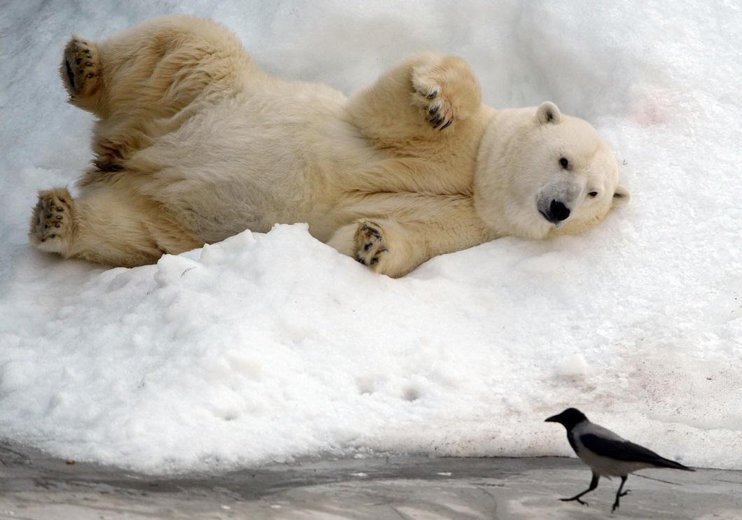 luchshie fotografii zhivotnyx nedeli v avguste 10 Лучшие фотографии животных со всего мира за неделю