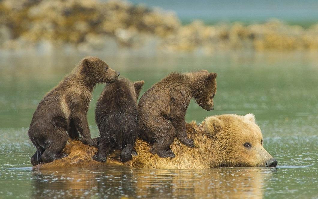 luchshie fotografii zhivotnyx nedeli v avguste 2 Лучшие фотографии животных со всего мира за неделю