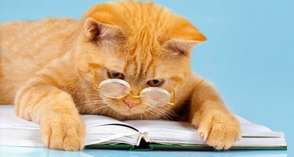 Рейтинг самых умных животных