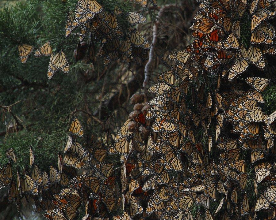 naturalphenomena11 Невероятная красота удивительных природных явлений