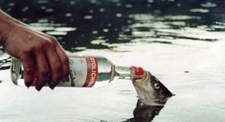 Alcoholfacts20 25 невероятных фактов про алкоголь, о которых вы, возможно, не догадывались